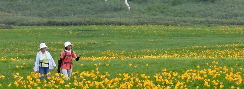 8/26開催! 湿地を楽しく体験・学ぶ しめっちフェスタ